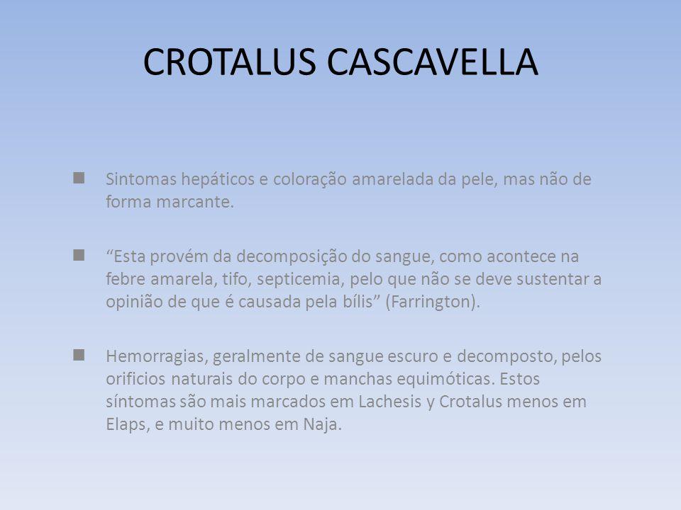 CROTALUS CASCAVELLA Difere das outra cascavéis por afetar o mental e as sensações num grau e extensão muito maiores que os tecidos. Menos hemorrágica.
