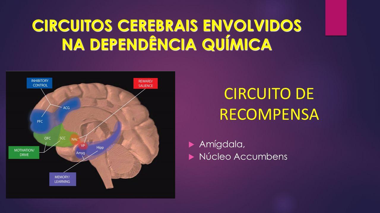 CIRCUITOS CEREBRAIS ENVOLVIDOS NA DEPENDÊNCIA QUÍMICA  Amígdala,  Núcleo Accumbens CIRCUITO DE RECOMPENSA