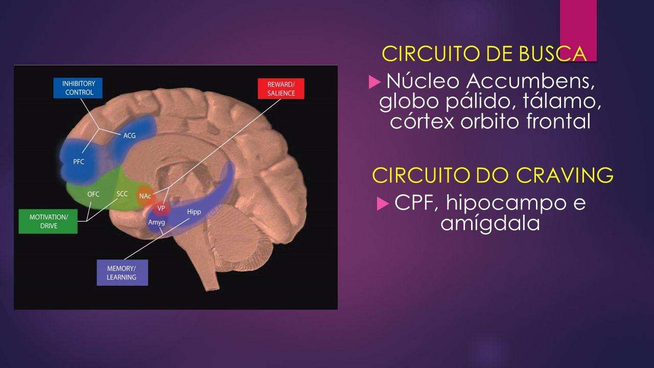 CIRCUITO DE BUSCA  Núcleo Accumbens, globo pálido, tálamo, córtex orbito frontal CIRCUITO DO CRAVING  CPF, hipocampo e amígdala