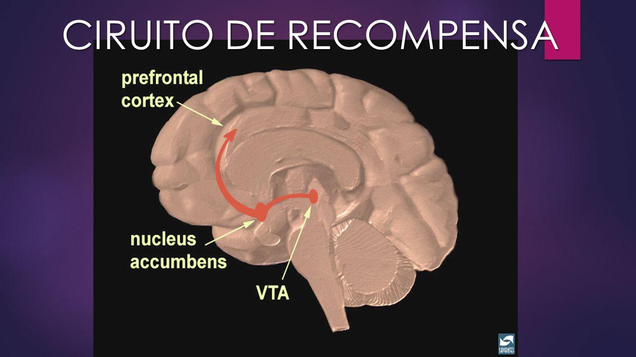 CIRUITO DE RECOMPENSA