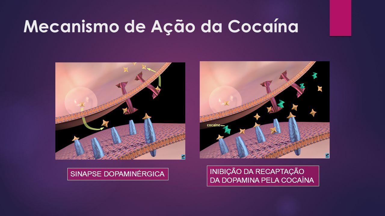 Mecanismo de Ação da Cocaína SINAPSE DOPAMINÉRGICA INIBIÇÃO DA RECAPTAÇÃO DA DOPAMINA PELA COCAÍNA
