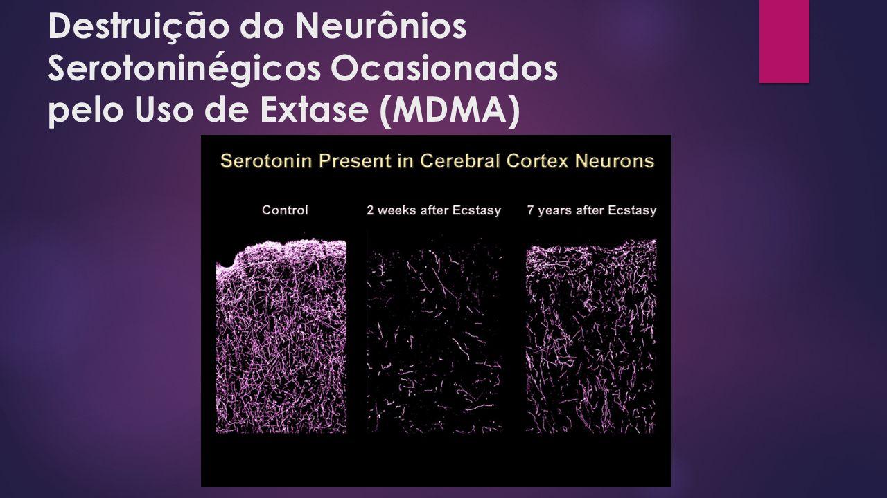 Destruição do Neurônios Serotoninégicos Ocasionados pelo Uso de Extase (MDMA)