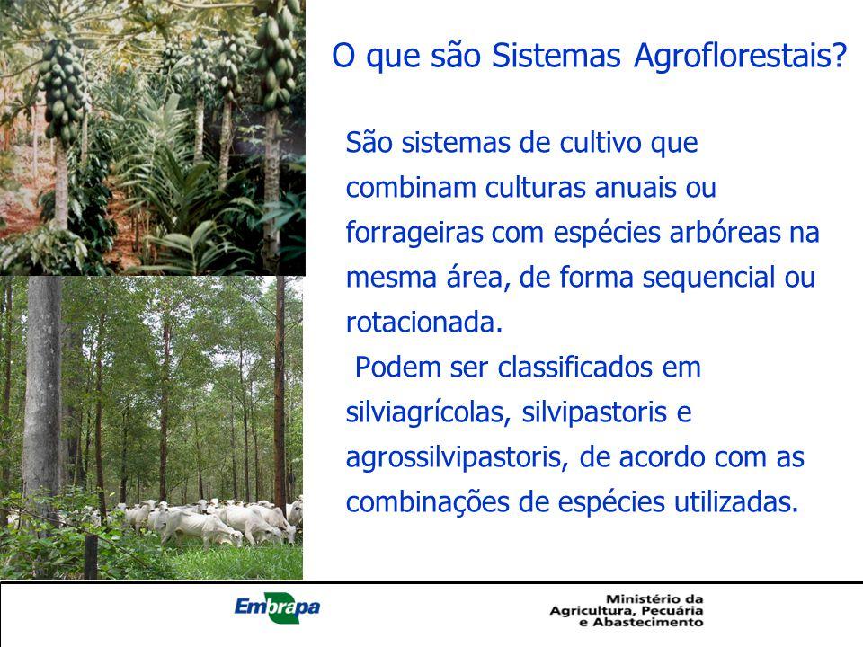 O que são Sistemas Agroflorestais? São sistemas de cultivo que combinam culturas anuais ou forrageiras com espécies arbóreas na mesma área, de forma s
