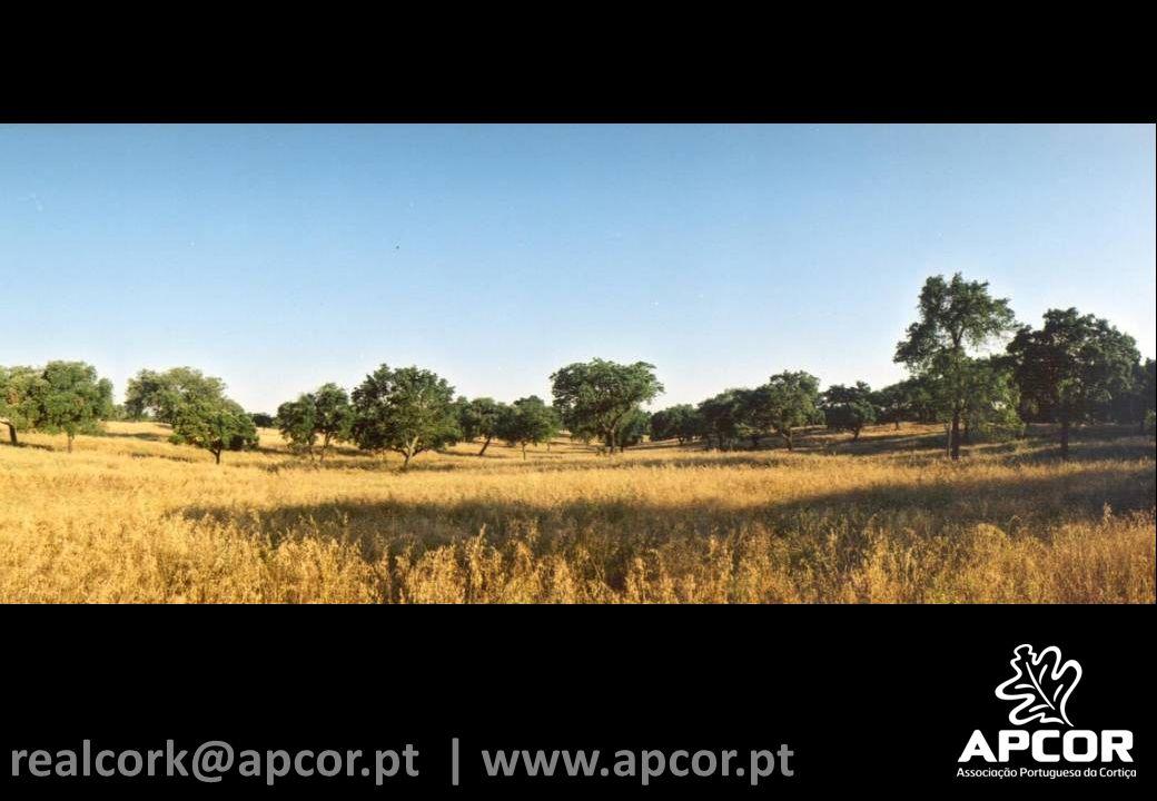 realcork@apcor.pt | www.apcor.pt
