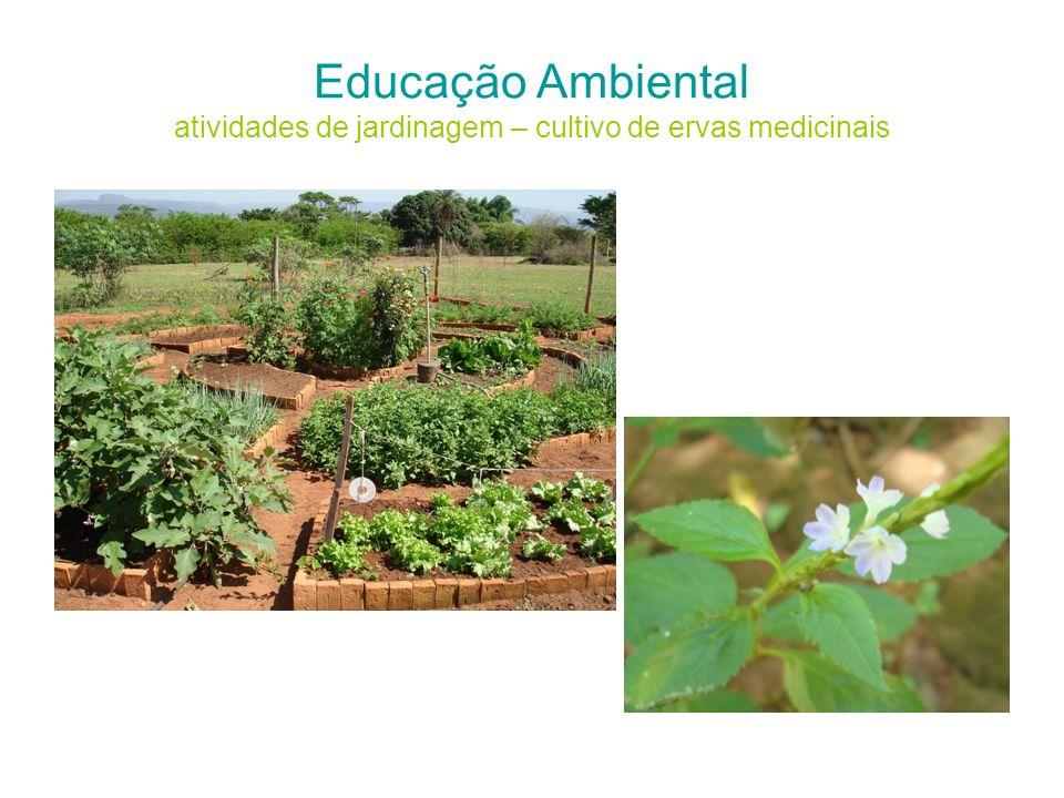 Educação Ambiental atividades de jardinagem – cultivo de ervas medicinais