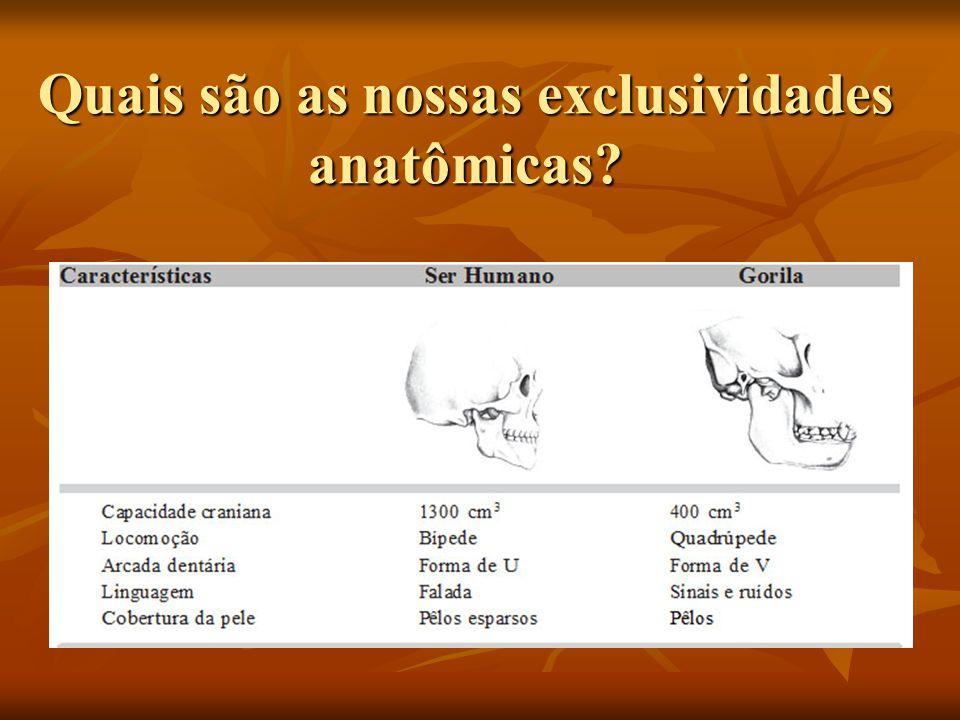 Quais são as nossas exclusividades anatômicas?