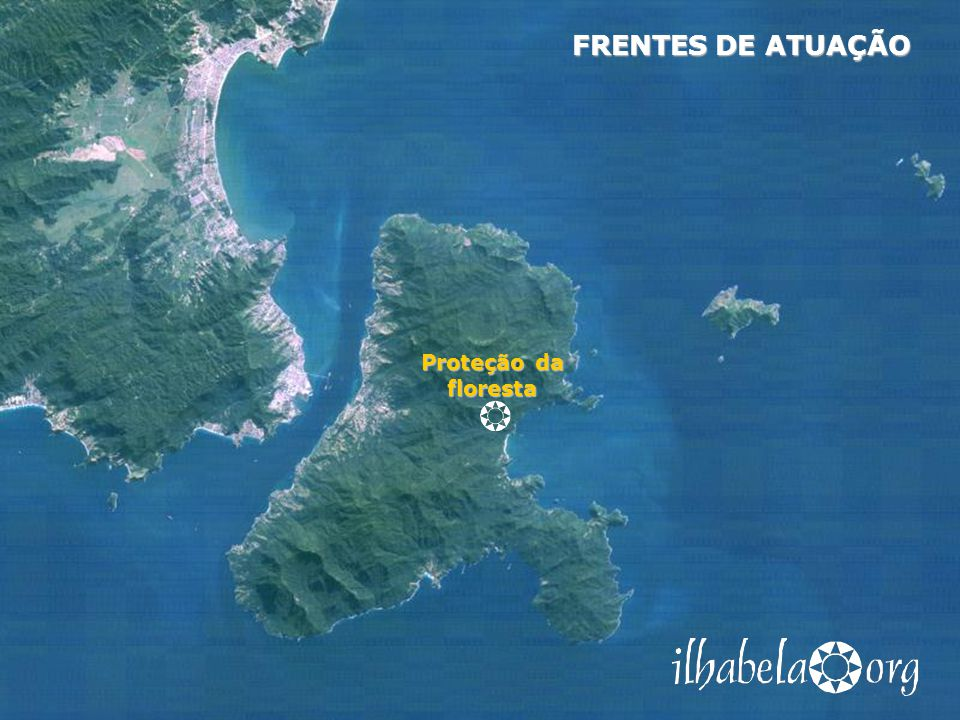 Proteção da floresta FRENTES DE ATUAÇÃO