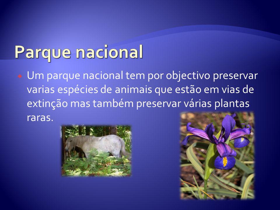  Um parque nacional tem por objectivo preservar varias espécies de animais que estão em vias de extinção mas também preservar várias plantas raras.