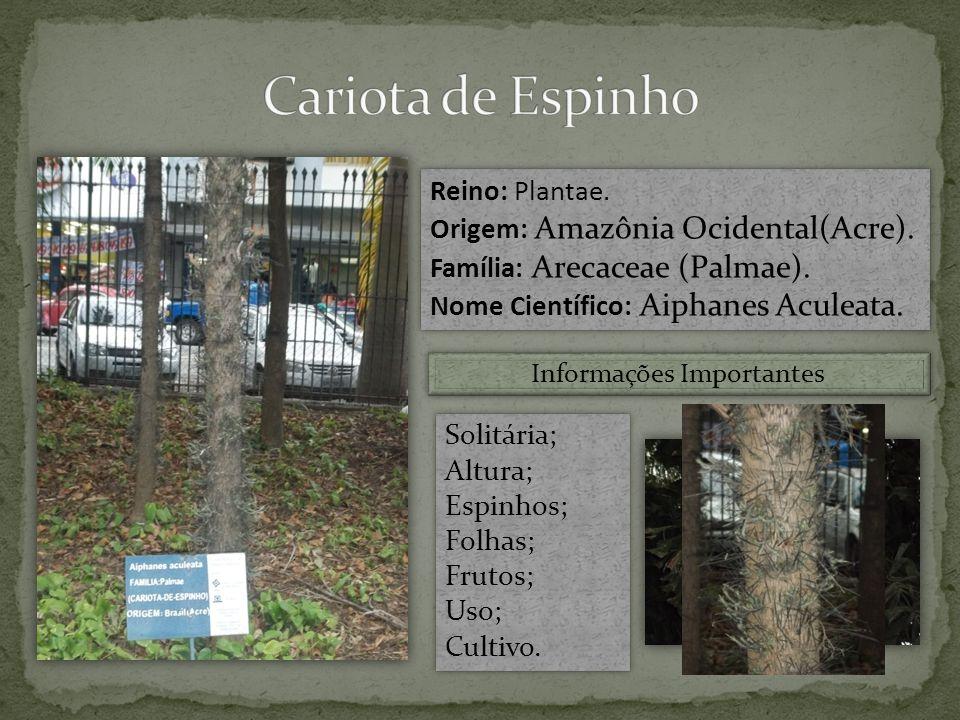 Reino: Plantae.Origem: Amazônia Ocidental(Acre). Família: Arecaceae (Palmae).
