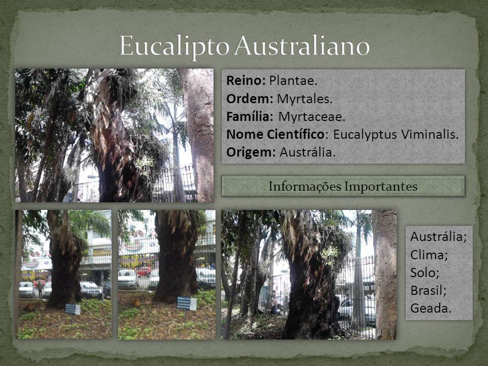 Reino: Plantae.Ordem: Myrtales. Família: Myrtaceae.