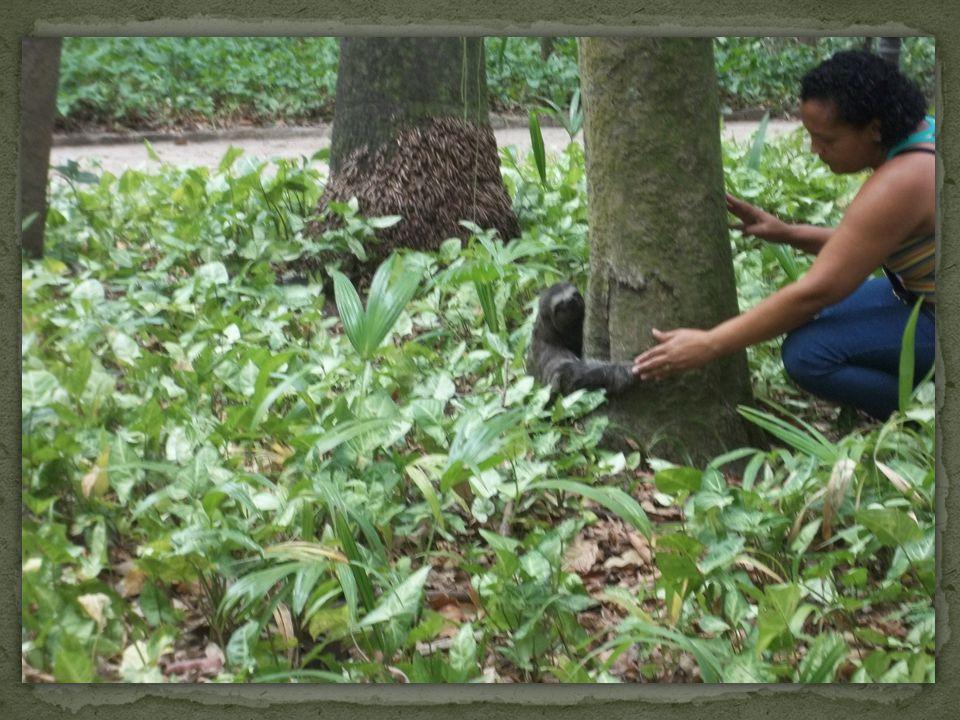 Concluímos que além de ser um lugar pequeno, o Parque Centenário tem uma boa diversidade ambiental.