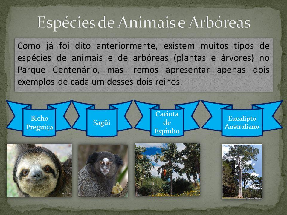 Como já foi dito anteriormente, existem muitos tipos de espécies de animais e de arbóreas (plantas e árvores) no Parque Centenário, mas iremos apresentar apenas dois exemplos de cada um desses dois reinos.