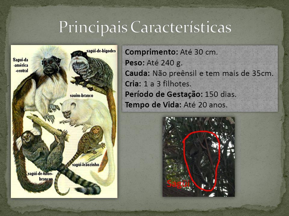  Selvas da América do Sul e América Central;  Vivem em grupos pequenos;  Unhas longas com a forma de garras;  Alimentação;  Dormem umas doze a quatorze horas por dia;  Raramente adotam a postura bípede;  Instalação e Deslocamento.