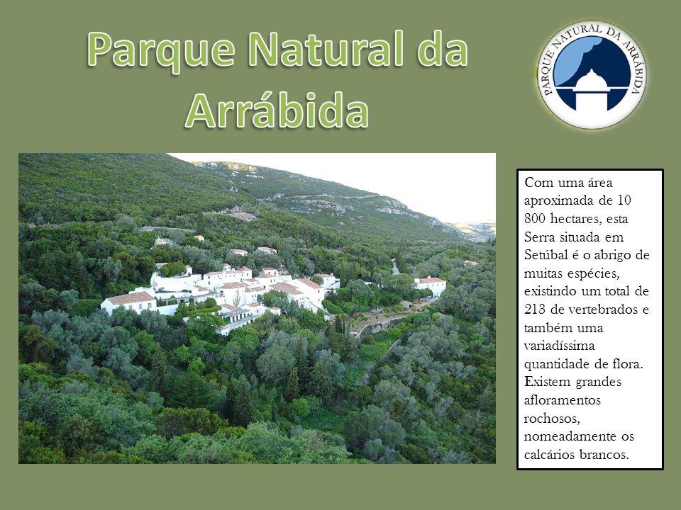 Com uma área aproximada de 10 800 hectares, esta Serra situada em Setúbal é o abrigo de muitas espécies, existindo um total de 213 de vertebrados e também uma variadíssima quantidade de flora.