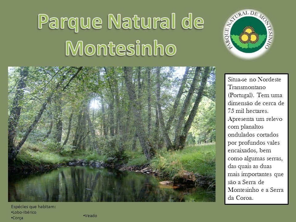 Possui uma área de 69700 hectares, localizada no sudeste do território português, na região do Baixo Alentejo.