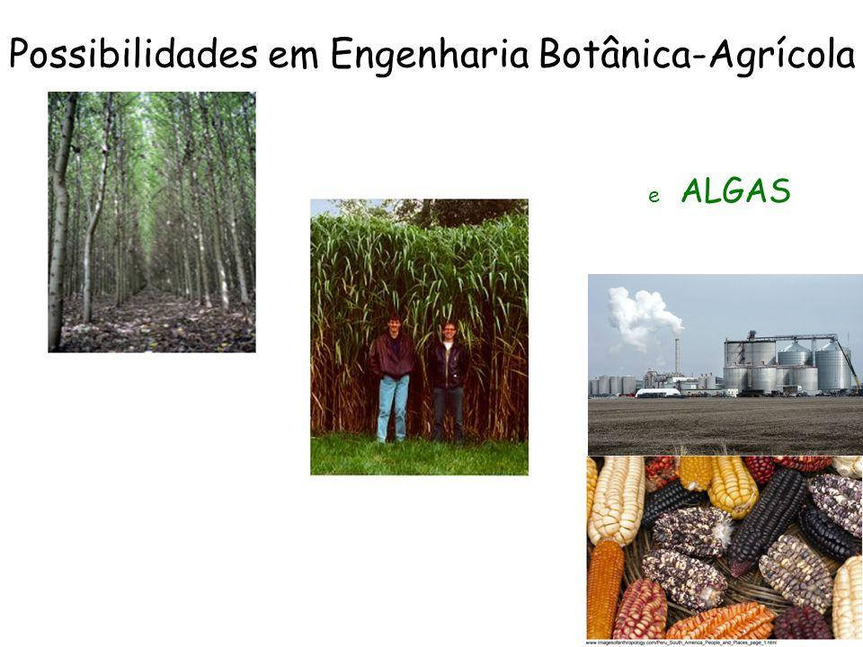 Possibilidades em Engenharia Botânica-Agrícola e ALGAS