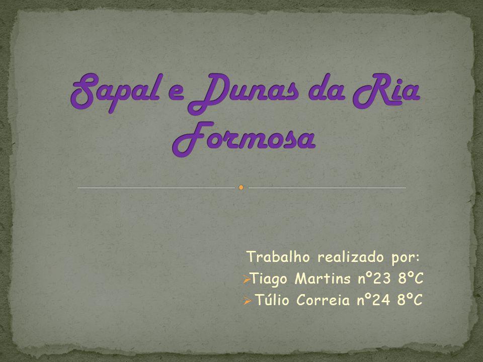 Trabalho realizado por:  Tiago Martins nº23 8ºC  Túlio Correia nº24 8ºC