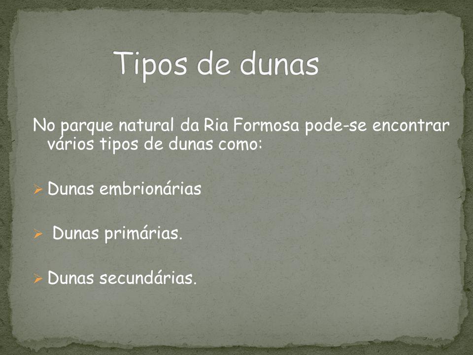 No parque natural da Ria Formosa pode-se encontrar vários tipos de dunas como:  Dunas embrionárias  Dunas primárias.  Dunas secundárias.