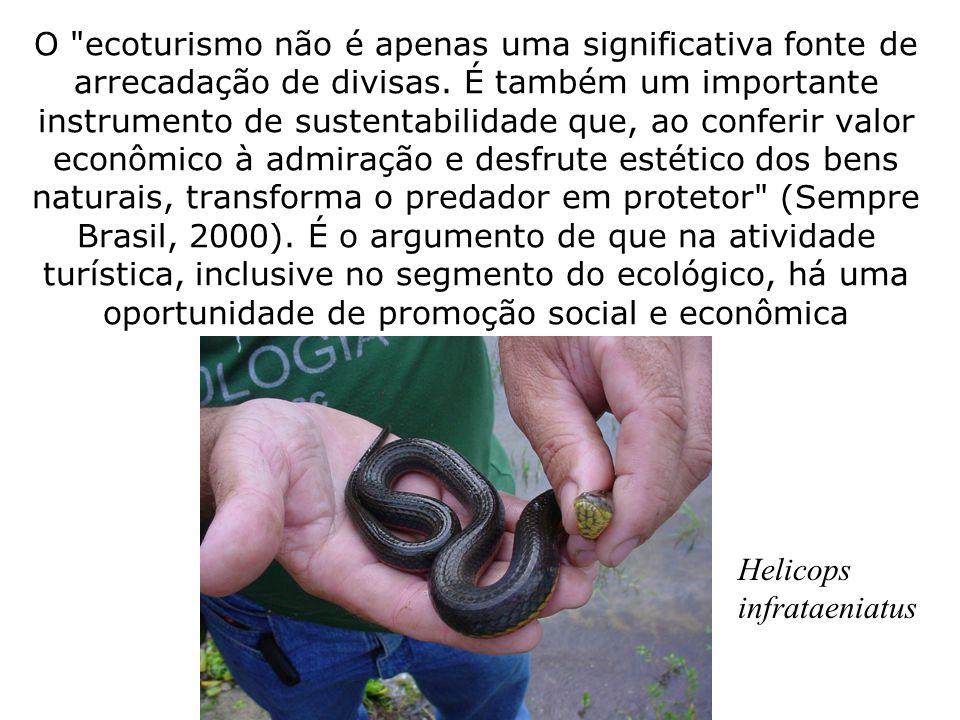 O ecoturismo não é apenas uma significativa fonte de arrecadação de divisas.