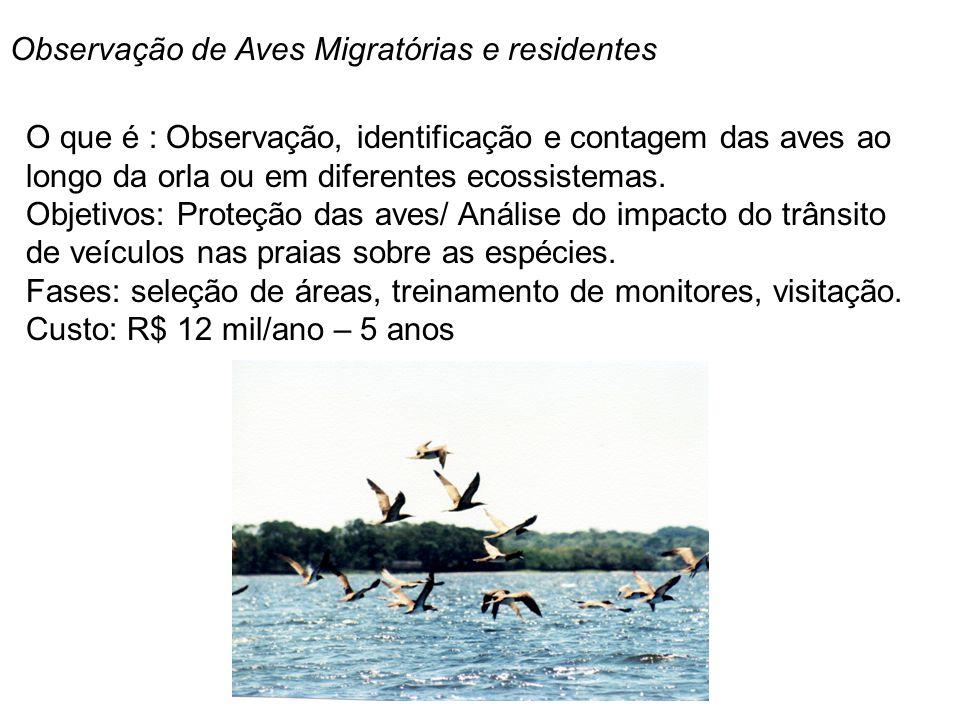 Observação de Aves Migratórias e residentes O que é : Observação, identificação e contagem das aves ao longo da orla ou em diferentes ecossistemas. Ob