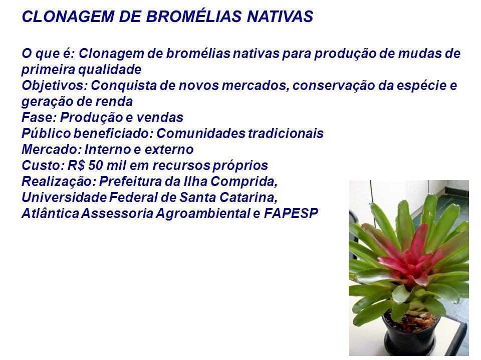 CLONAGEM DE BROMÉLIAS NATIVAS O que é: Clonagem de bromélias nativas para produção de mudas de primeira qualidade Objetivos: Conquista de novos mercad