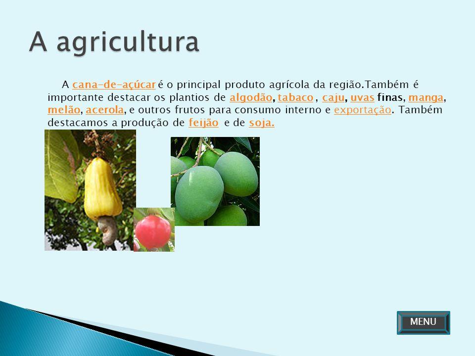 A cana-de-açúcar é o principal produto agrícola da região.Também é importante destacar os plantios de algodão, tabaco, caju, uvas finas, manga, melão,