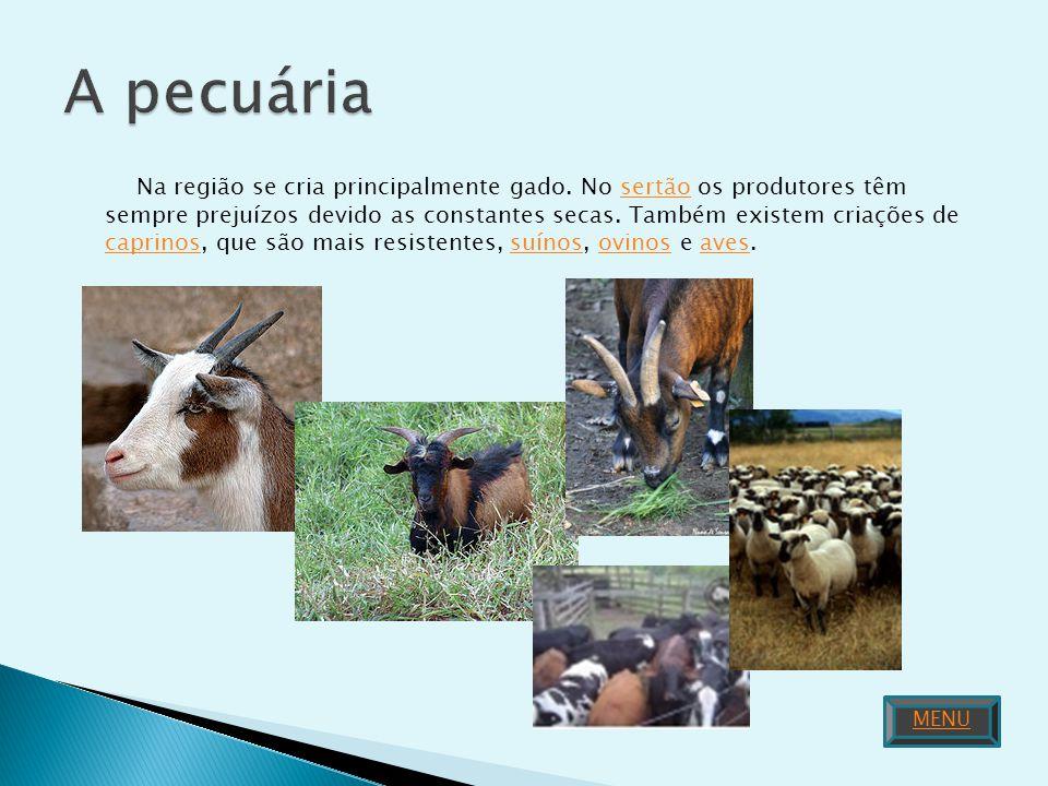Na região se cria principalmente gado. No sertão os produtores têm sempre prejuízos devido as constantes secas. Também existem criações de caprinos, q
