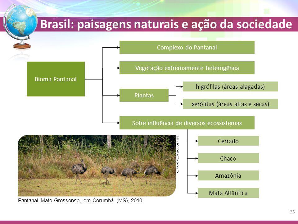 Brasil: paisagens naturais e ação da sociedade Plantas Bioma Pantanal Complexo do Pantanal Vegetação extremamente heterogênea higrófilas (áreas alagadas) xerófitas (áreas altas e secas) Sofre influência de diversos ecossistemas Cerrado Chaco Amazônia Mata Atlântica Pantanal Mato-Grossense, em Corumbá (MS), 2010.