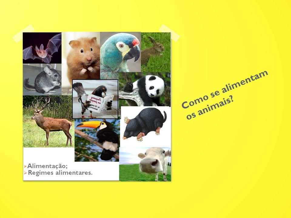 Como se alimentam os animais?  Alimentação;  Regimes alimentares.