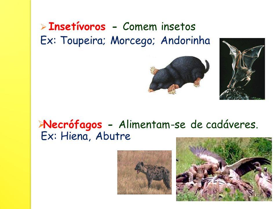  Insetívoros - Comem insetos Ex: Toupeira; Morcego; Andorinha  Necrófagos - Alimentam-se de cadáveres.
