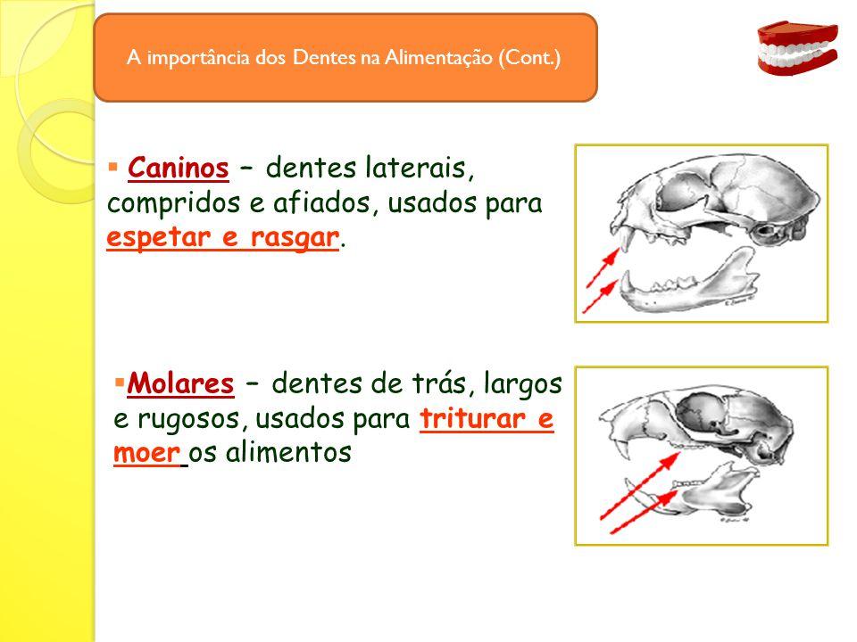  Caninos – dentes laterais, compridos e afiados, usados para espetar e rasgar.