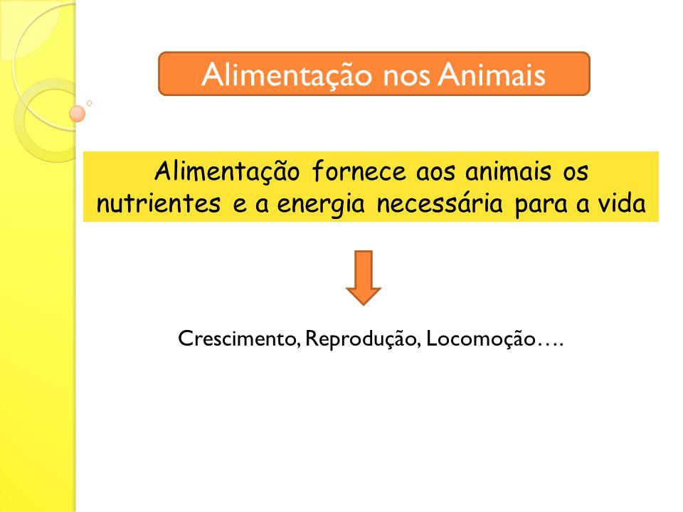 Alimentação fornece aos animais os nutrientes e a energia necessária para a vida Alimentação nos Animais Crescimento, Reprodução, Locomoção….