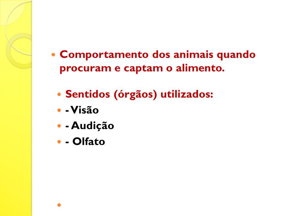 Comportamento dos animais quando procuram e captam o alimento.