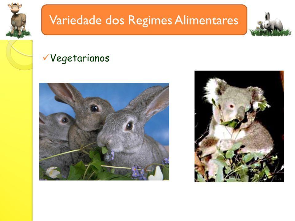 Variedade dos Regimes Alimentares Vegetarianos