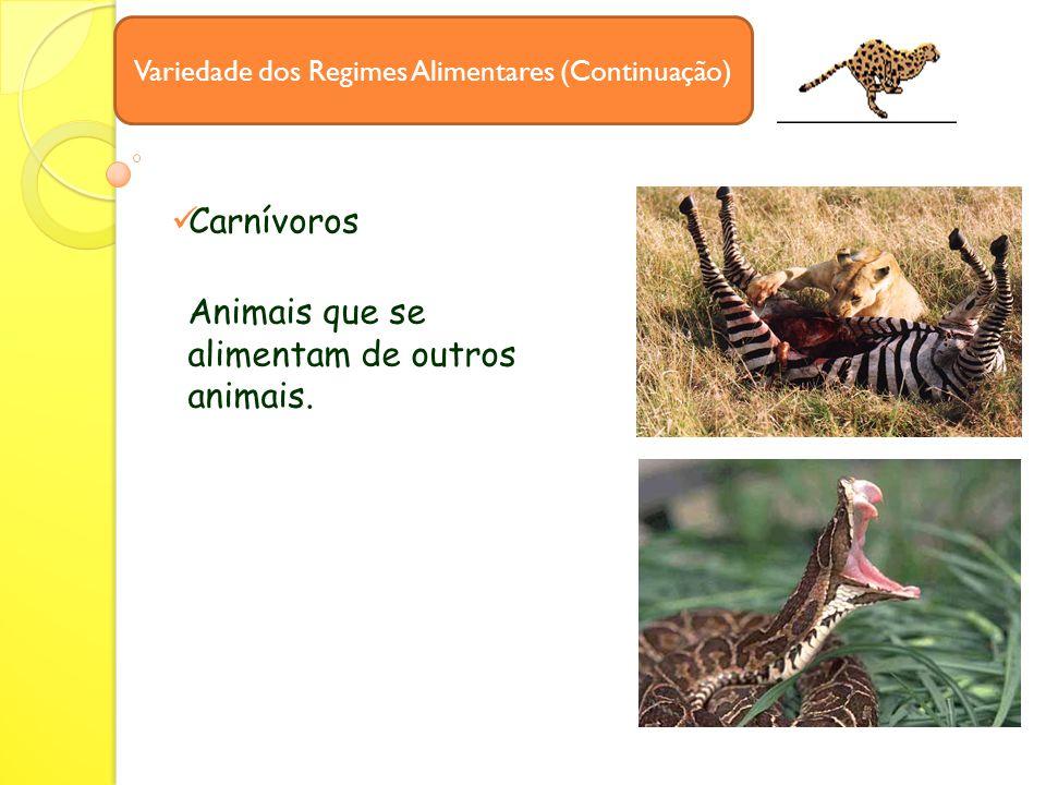 Carnívoros Variedade dos Regimes Alimentares (Continuação) Animais que se alimentam de outros animais.