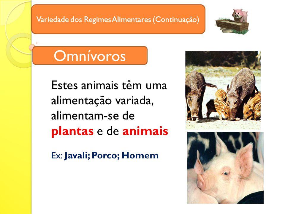 Variedade dos Regimes Alimentares (Continuação) Estes animais têm uma alimentação variada, alimentam-se de plantas e de animais Ex: Javali; Porco; Homem Omnívoros