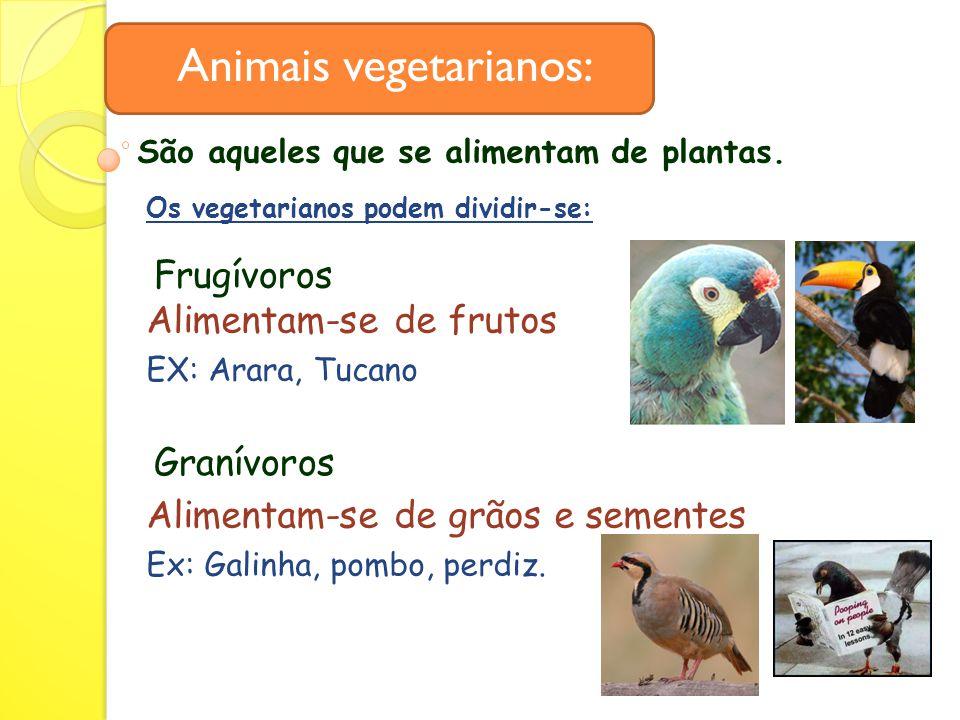 Animais vegetarianos: Frugívoros Alimentam-se de frutos EX: Arara, Tucano Granívoros Alimentam-se de grãos e sementes Ex: Galinha, pombo, perdiz.