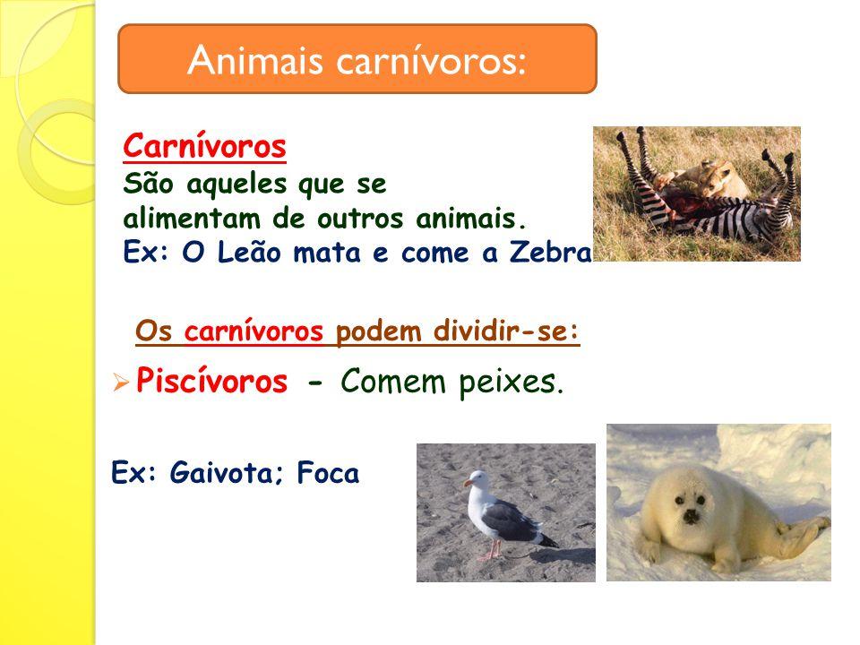 Animais carnívoros:  Piscívoros - Comem peixes.