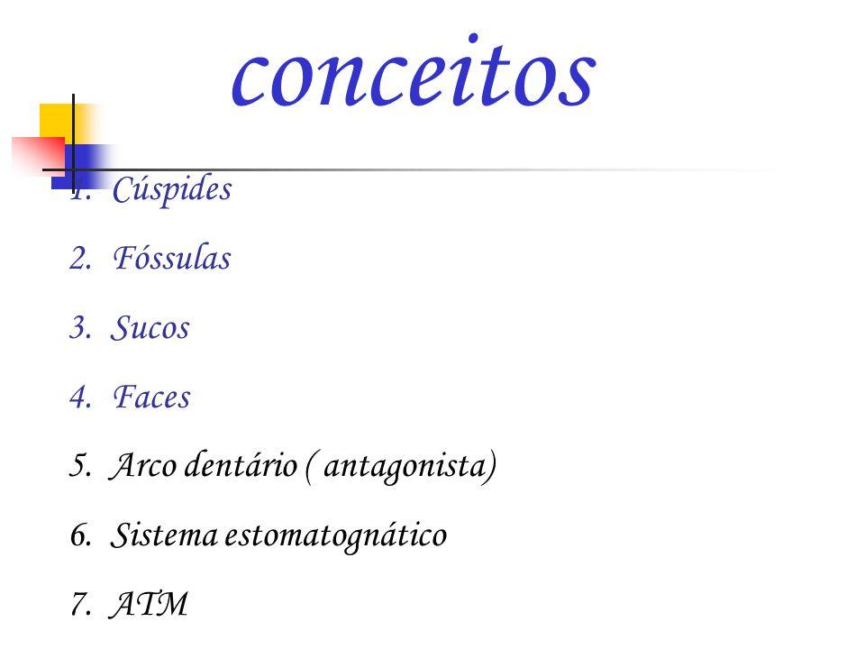 conceitos 1.Cúspides 2.Fóssulas 3.Sucos 4.Faces 5.Arco dentário ( antagonista) 6.Sistema estomatognático 7.ATM