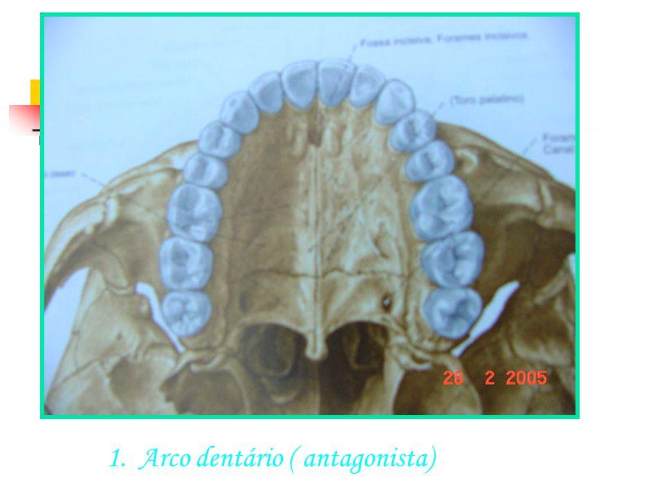 SUTURA ÓSSEA 1.Arco dentário ( antagonista)