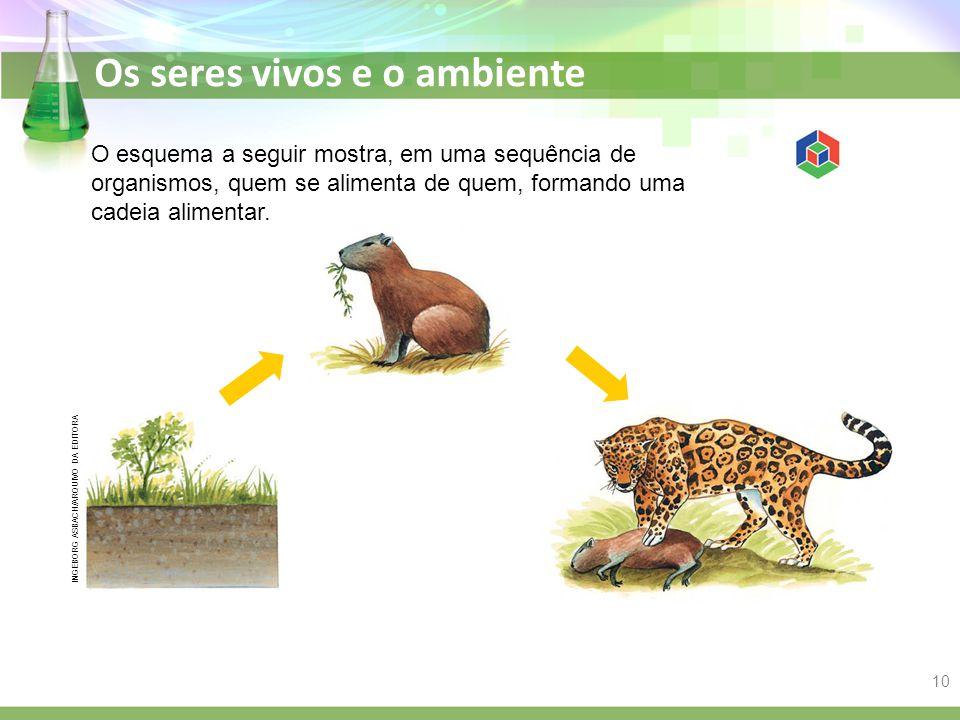 Os seres vivos e o ambiente O esquema a seguir mostra, em uma sequência de organismos, quem se alimenta de quem, formando uma cadeia alimentar. INGEBO
