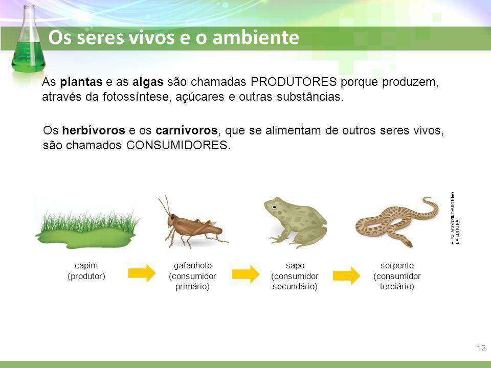 Os seres vivos e o ambiente As plantas e as algas são chamadas PRODUTORES porque produzem, através da fotossíntese, açúcares e outras substâncias. Os