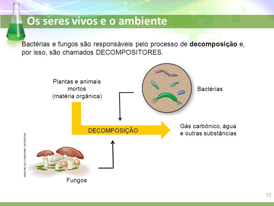 Os seres vivos e o ambiente Bactérias e fungos são responsáveis pelo processo de decomposição e, por isso, são chamados DECOMPOSITORES. Plantas e anim