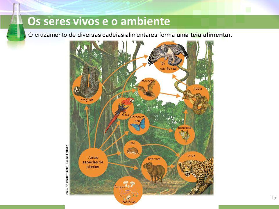 Os seres vivos e o ambiente O cruzamento de diversas cadeias alimentares forma uma teia alimentar. OSVALDO SEQUETIN/ARQUIVO DA EDITORA Várias espécies
