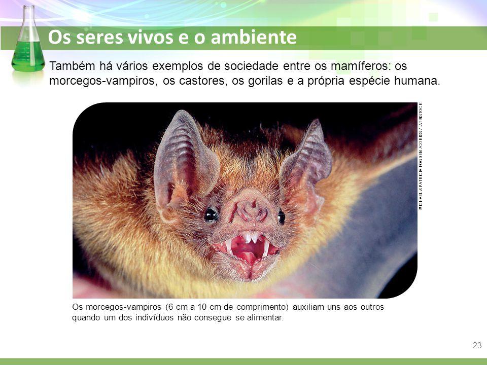 Os seres vivos e o ambiente Também há vários exemplos de sociedade entre os mamíferos: os morcegos-vampiros, os castores, os gorilas e a própria espéc
