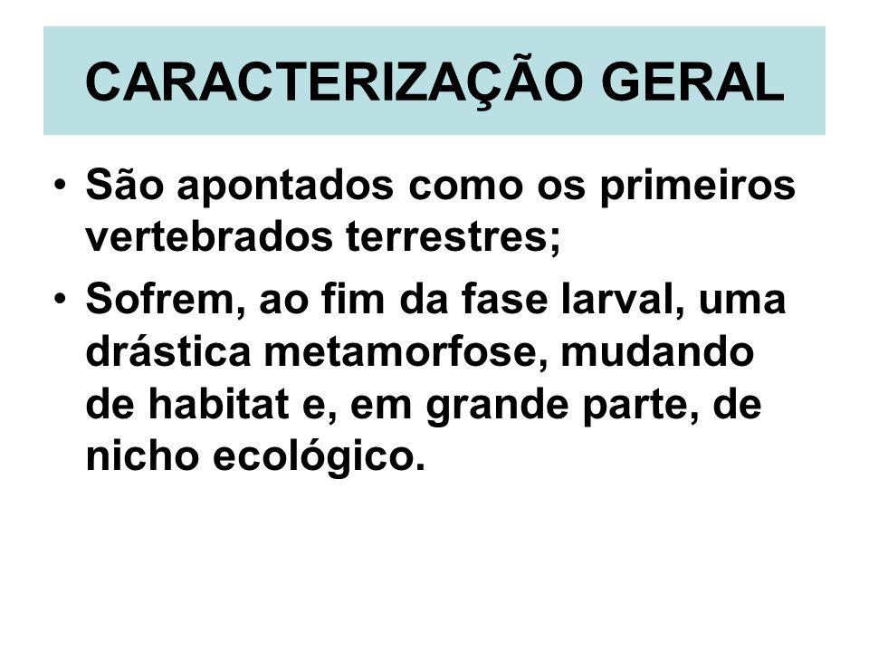 CARACTERIZAÇÃO GERAL São apontados como os primeiros vertebrados terrestres; Sofrem, ao fim da fase larval, uma drástica metamorfose, mudando de habitat e, em grande parte, de nicho ecológico.