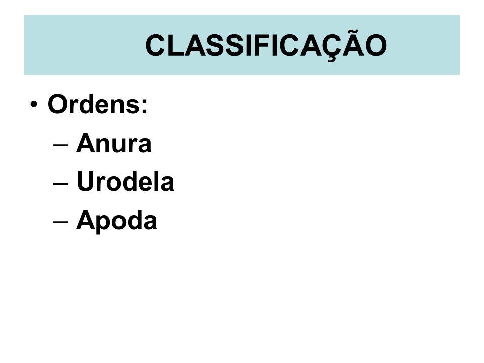 CLASSIFICAÇÃO Ordens: – Anura – Urodela – Apoda
