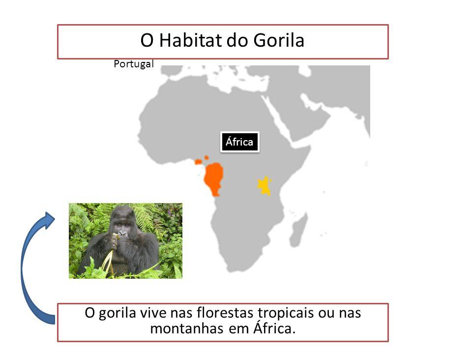 O Gorila é um animal Mamífero (Resumo) Características dos Mamíferos Glândulas mamárias Dentes diferenciados Corpo coberto de pelo Cérebro desenvolvid