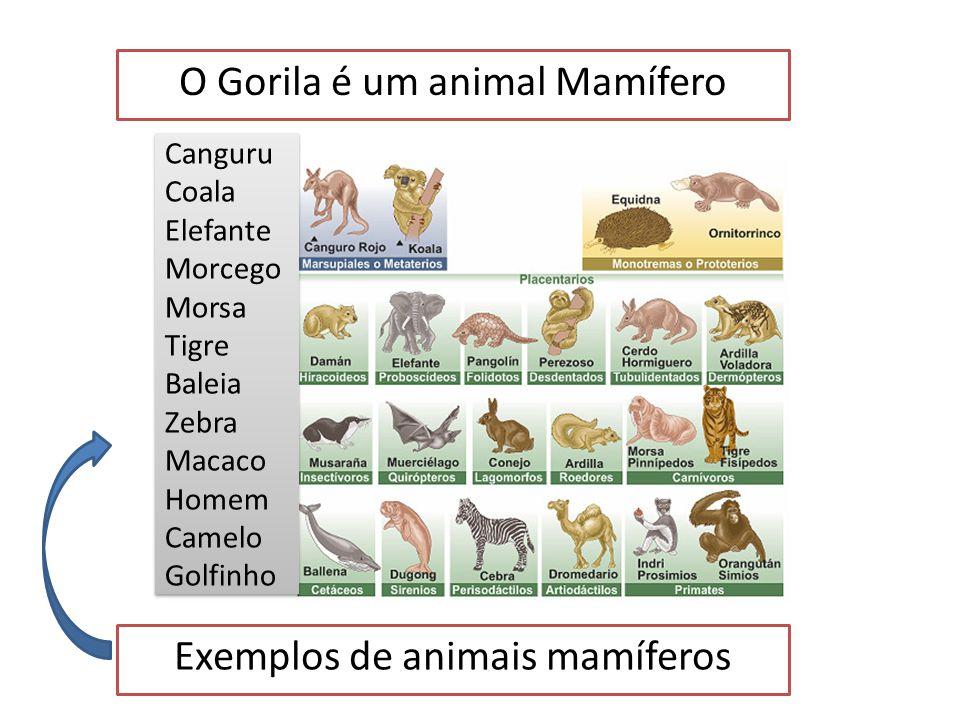 O Gorila é um animal Vertebrado Tem esqueleto interno