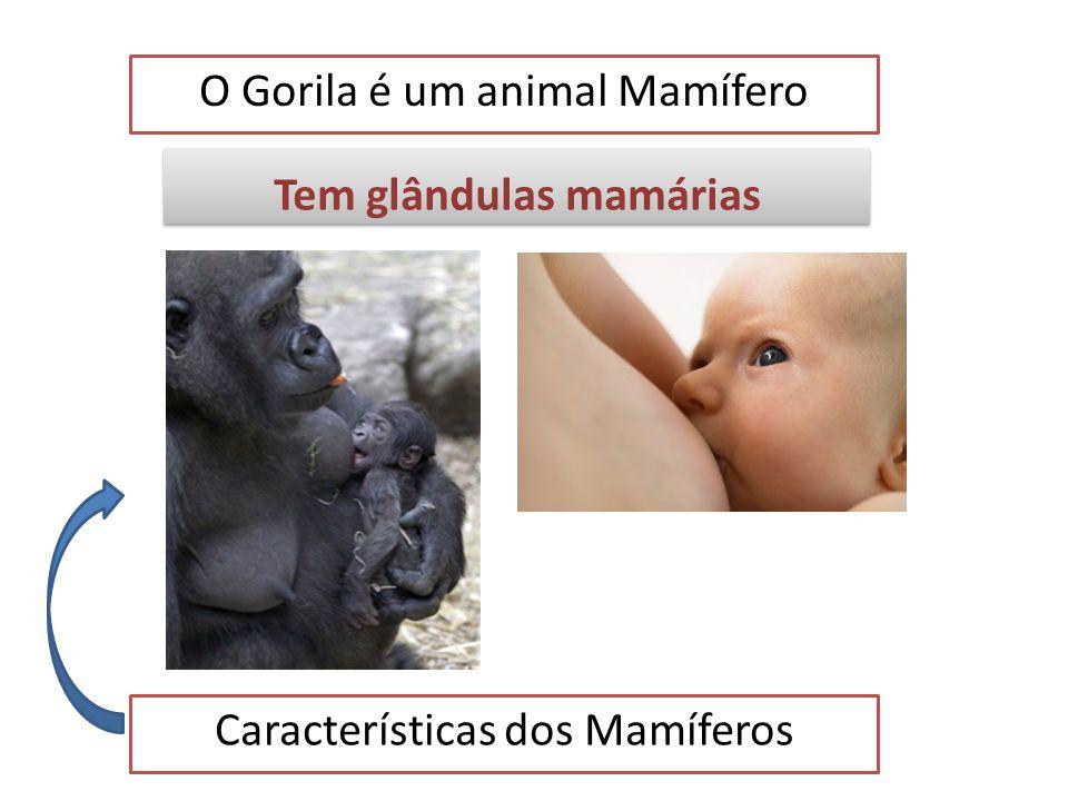 O Gorila é um animal Mamífero Exemplos de animais mamíferos Canguru Coala Elefante Morcego Morsa Tigre Baleia Zebra Macaco Homem Camelo Golfinho Cangu
